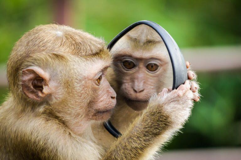 Online foredrag. Vi ligner aber. Nudging og adfærdsdesign. Book dit online foredrag